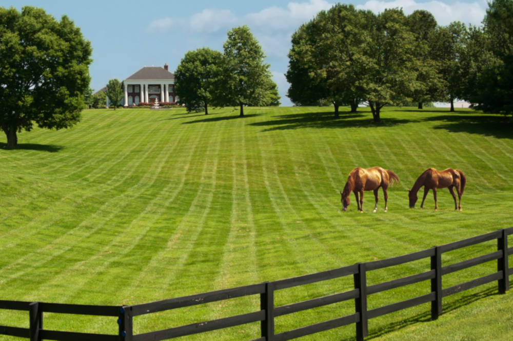 Large property with horses and several acres of pasture.