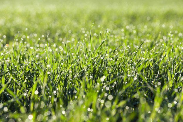 sprinkler system watering grass
