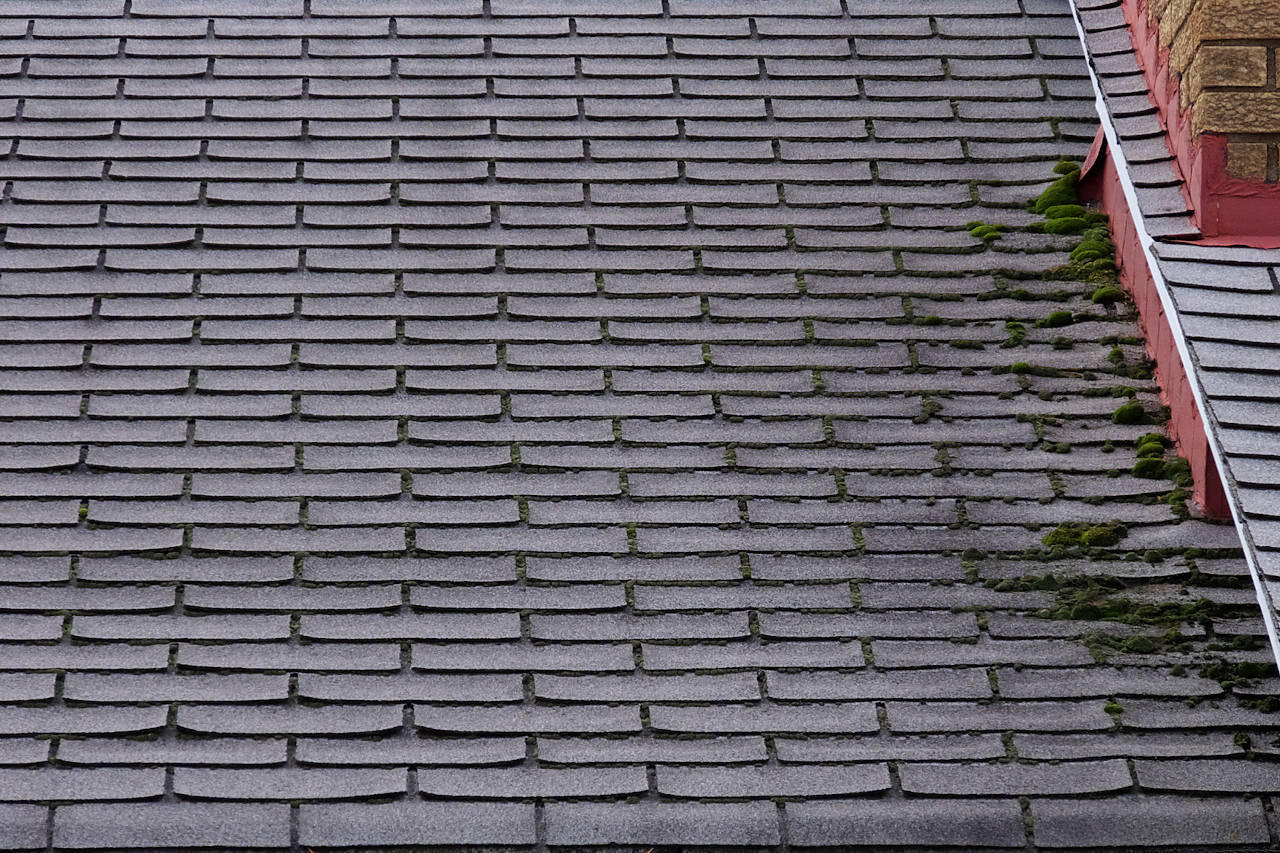 roof with moss on each shingle